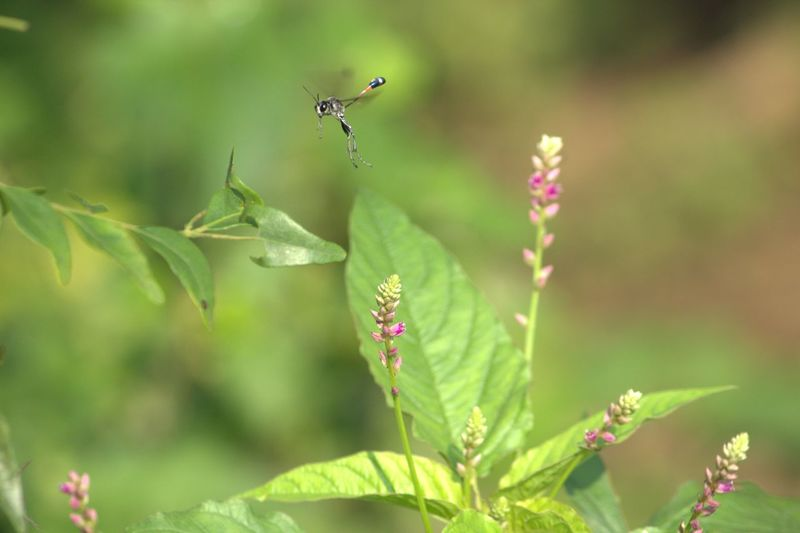 Insect flying above plants against blurred background