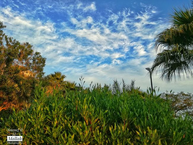 Sky Tree Growth Nature Beauty In Nature Low Angle View Day First Eyeem Photo