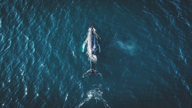 Lonely whale. Nautical Vessel Transportation High Angle View Day Mode Of Transport Water Teamwork Sea Waterfront Outdoors Crew Nature No People Rowing Iceland Whale