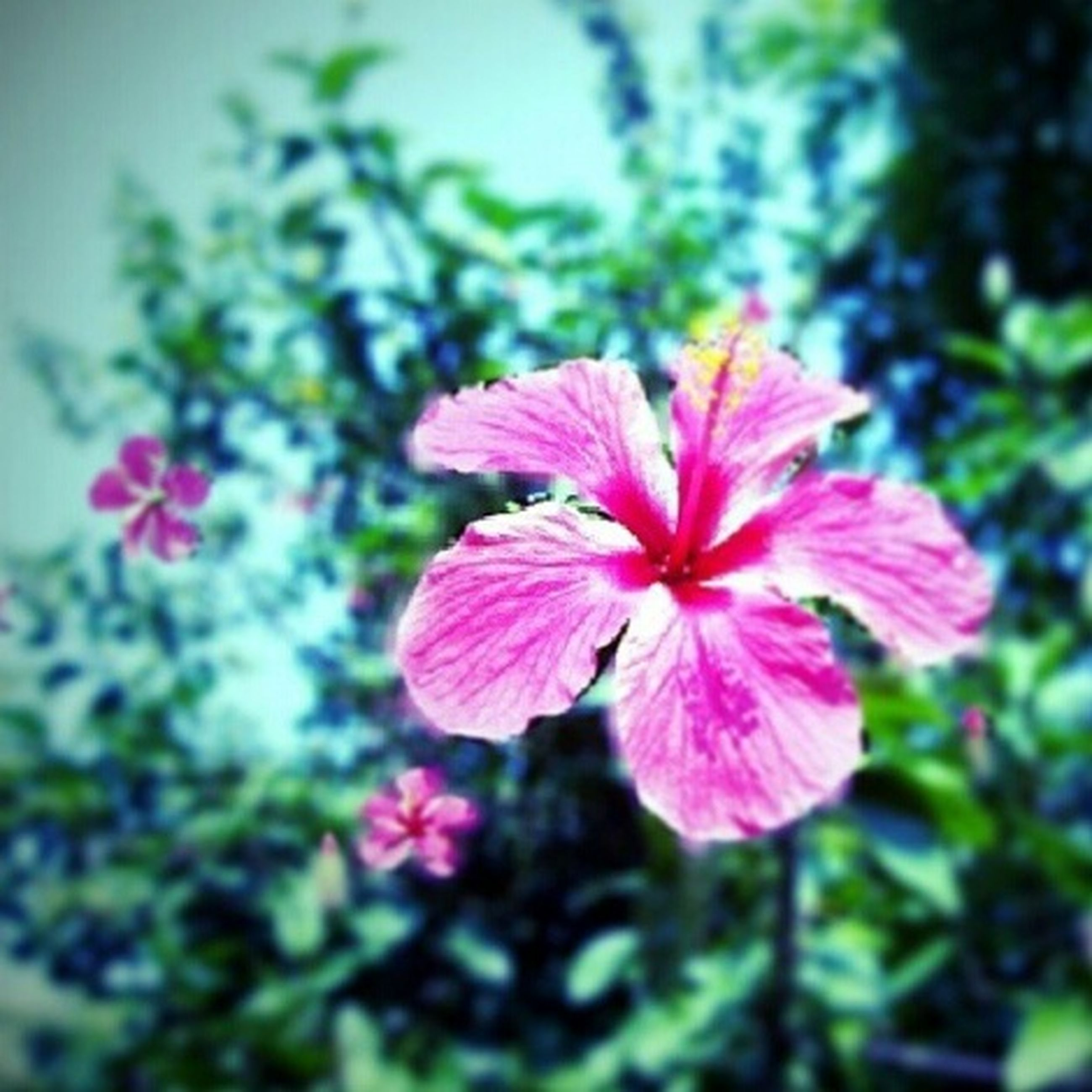 flower, petal, freshness, fragility, growth, flower head, pink color, beauty in nature, focus on foreground, close-up, blooming, nature, plant, in bloom, pollen, stamen, day, park - man made space, outdoors, blossom