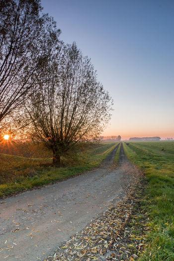 Sunrise from Oranjedijk, IJzendijke EyeEm Market © Sunrise Landscape Field Tranquil Scene Dirt Road Agriculture Zeeuws Vlaanderen Zeeland  The Netherlands Sony A77ii Sky Plant