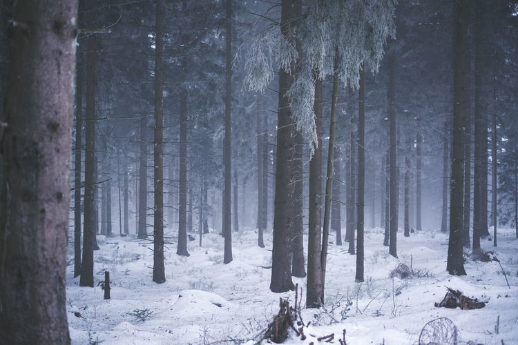 Lost in the woods A Walk In The Woods Beauty In Nature Cold Temperature Day Forest Forest Photography Landscape Nature No People Outdoors Pine Woodland Scenics Snow Tree Tree Trunk Trees Winter Winter WoodLand Shades Of Winter