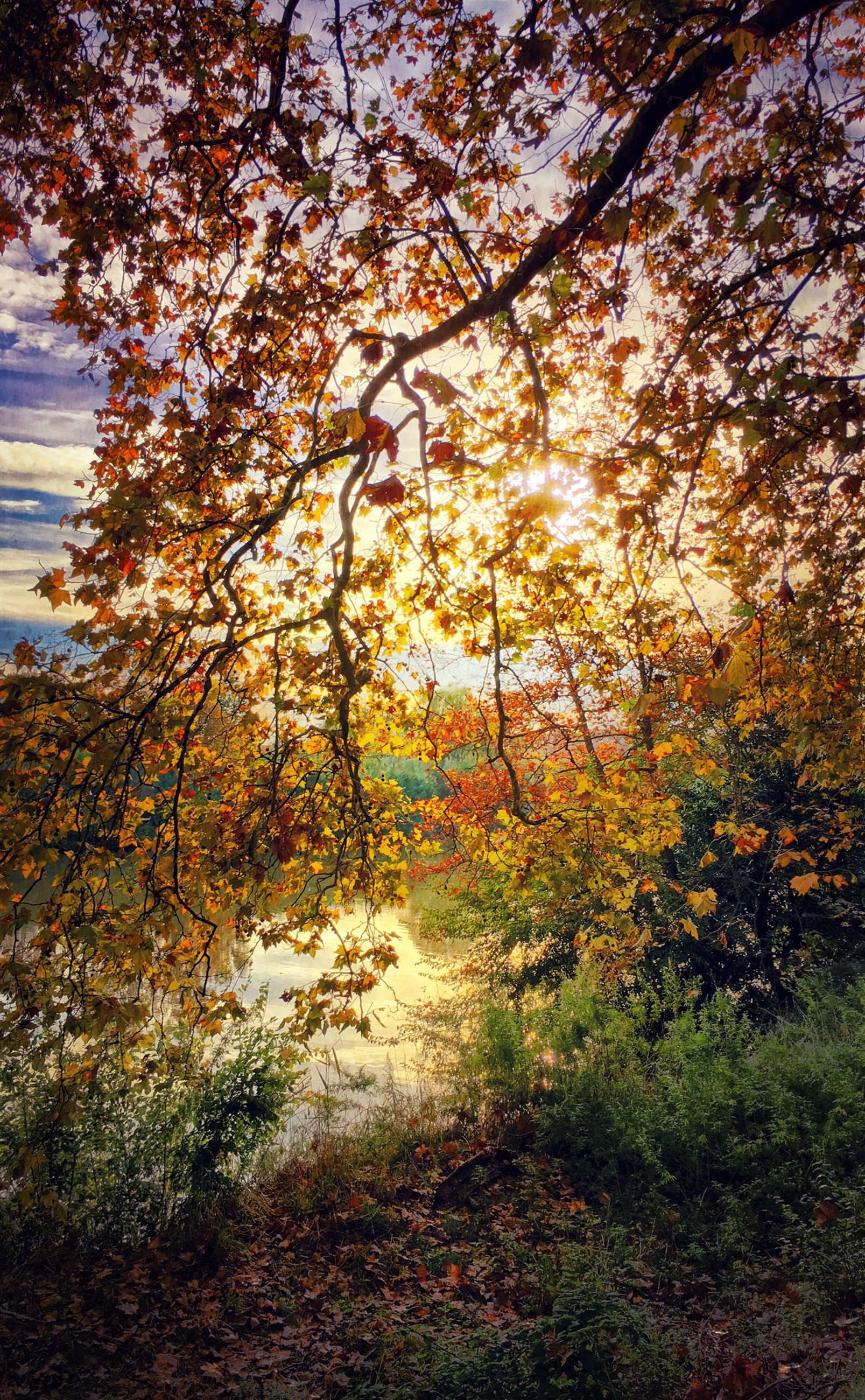 tree, tranquility, autumn, growth, beauty in nature, nature, tranquil scene, branch, season, scenics, change, sunlight, leaf, orange color, outdoors, no people, day, non-urban scene, forest, plant