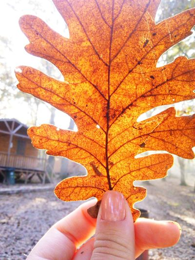 Tuzlamarina Leaves🌿 Tree Human Hand Human Body Part One Person Human Finger Day Outdoors Autumn Close-up Leaf One Woman Only Adults Only Real People Only Women People Adult Nature Sky