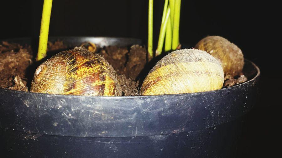 Snails in Plants