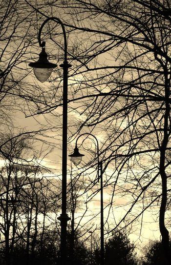 Bare Tree Lighting Equipment Nature No People Silhouette Sky Street Light Sunset Tree