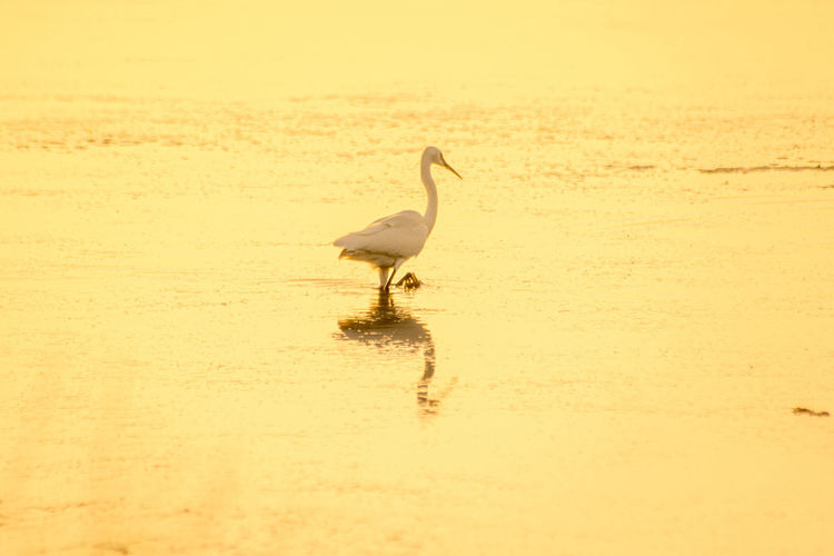 Side view of a bird walking on beach