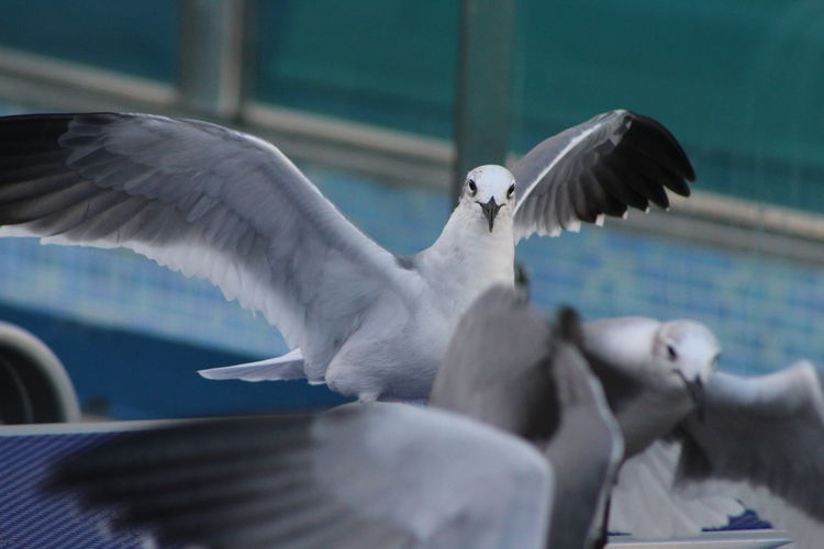 Close-up of seagulls