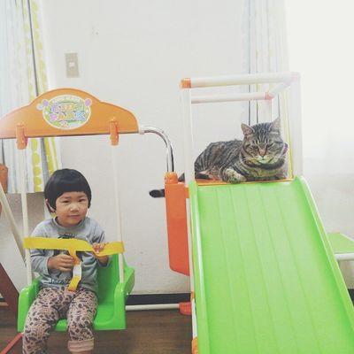 おはようございます☁ ・ 今朝は仲良く?プレイジムで遊んでいます。 このプレイジムの隣にキャットタワーあるのに、日中はこちらにいるカレです😸 ・ ・ 素敵な休日を...♩ 猫さんとの生活 ねこ にゃんだふるらいふ ねこのいる生活 にゃんこcat_stagram nekostagram catworld_kawaii_cats animals_cuts きじとら 3歳きんたかんた 2歳8ヶ月男のコ ig_beautiful_kids ig_kids kids_stagram children boysなかよし おはようございます