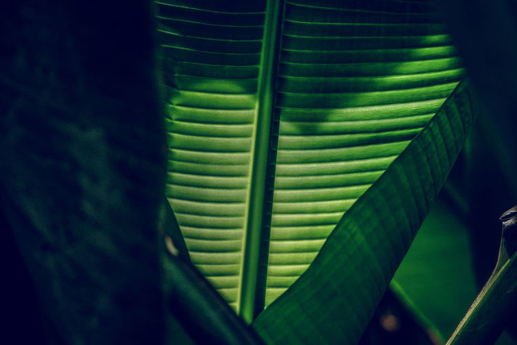 Leaf Plant Part Green Color Plant No People Nature Close-up Growth Beauty In Nature Day Pattern Indoors  Natural Pattern Tree Freshness Palm Leaf Palm Tree Focus On Foreground