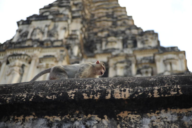 Low angle view of animal on building against sky
