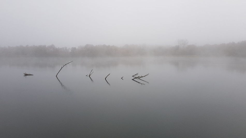 Nature Niebla Nieblas#invierno#paisaje Paisaje Paisaje Natural Tronco Ramas🌿 Pantano Winter Agua Water Water Reflections Flying Fog Water Sky