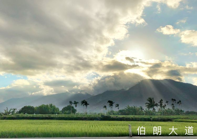 伯朗大道 Taidong, Taiwan Bolangdadao Mountain Sunset Paddy Field Cloud - Sky Sky Field Landscape Beauty In Nature Land Environment First Eyeem Photo Beauty In Nature Land Field Plant Agriculture Nature Crop  Tree Day Farm Growth Tranquility Scenics - Nature Tranquil Scene Rural Scene No People