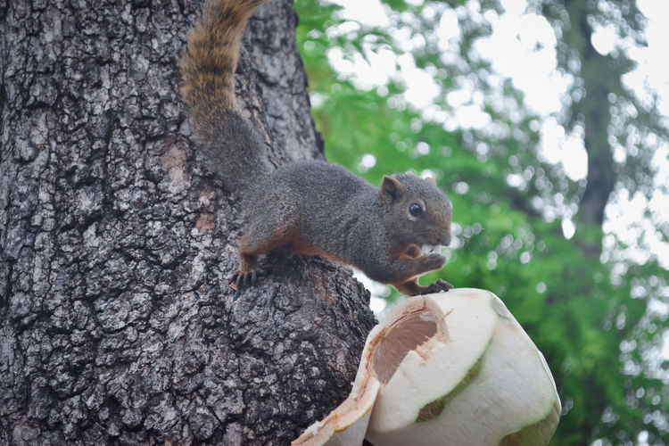 Animal Themes Animal Wildlife Animals In The Wild Close-up Day Eating Food Mammal Nature No People One Animal Outdoors Squirrel Tree