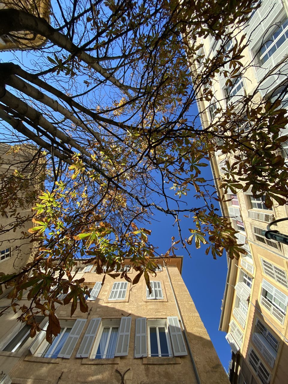 building exterior, architecture, tree, built structure, plant, sky, low angle view, nature, building, branch, growth, no people, day, sunlight, city, clear sky, outdoors, blue, residential district, window, directly below