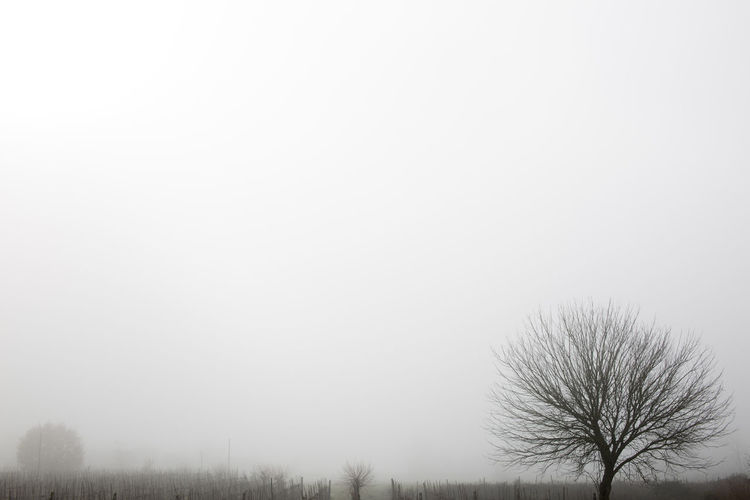Bare Tree Beauty In Nature Copy Space Day Environment Fog Land Landscape Nature No People Non-urban Scene Outdoors Plant Scenics - Nature Sky Tranquil Scene Tranquility Tree