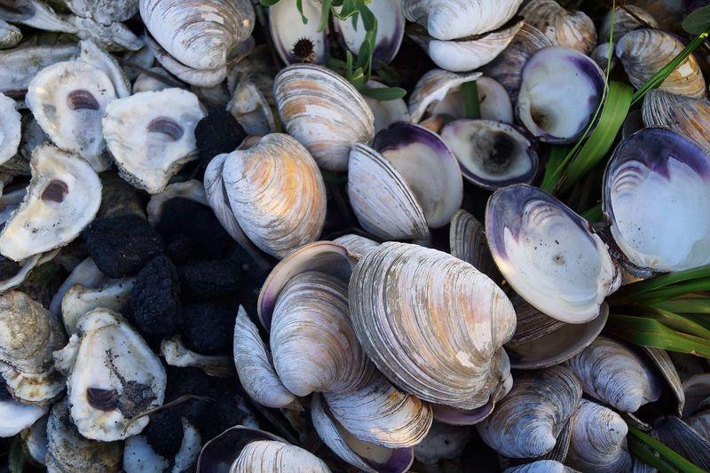 Full frame shot of seashells on beach