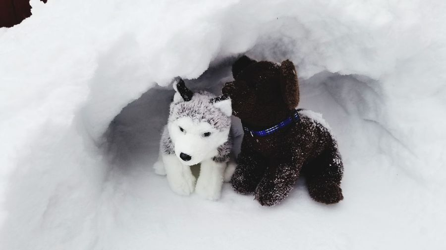 Stuffed toy husky and goldendoodle playing in snow