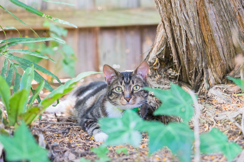 Animal Themes Day Domestic Animals Domestic Cat Feline Looking At Camera Mammal Nature No People One Animal Outdoors Pets Plant Portrait Tabby Cat Whisker