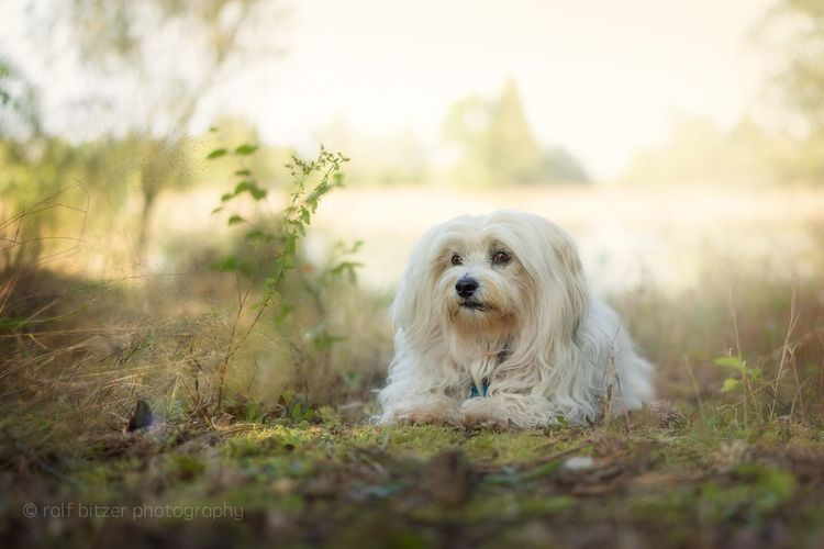 Dog Animal Themes Pets One Animal Looking At Camera Nature