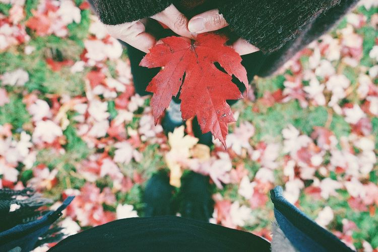 Warm in coldness Love Autumn colors Canada Maple Leaf Couple Plant Decoration Plant Part Leaf Nature No People Autumn Mood Beauty In Nature