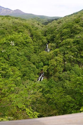 Japan Japan Photography Nikon Travel Nikonphotography Travel Destinations
