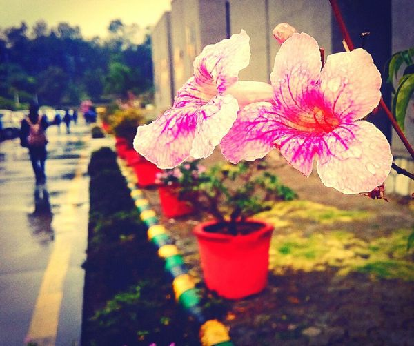 In love with nature. Mobilephotography Raindrops Flowers Nature Petals Enjoying Life