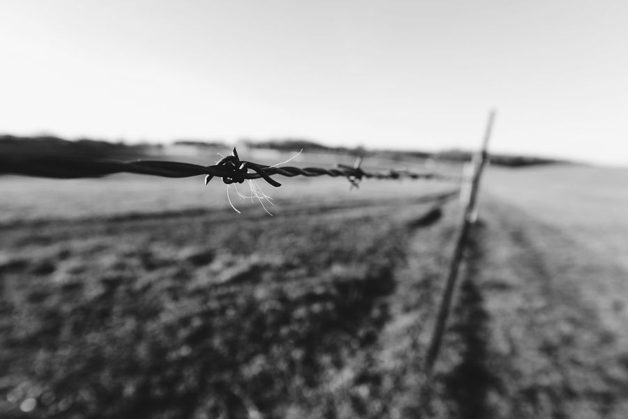Check This Out Focus Taking Photos Absorbing Connecticut Farm Black And White Countryside Enjoying The View Fineart Fine Art Photography Wideangle Cowfarm Cool Capturing Freedom