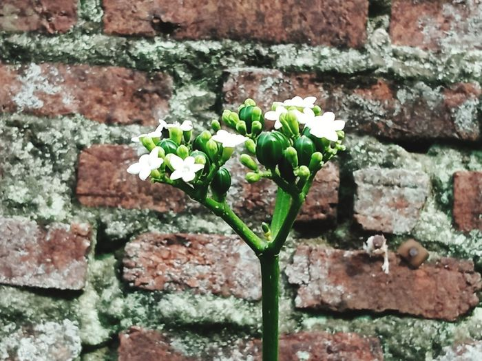 Close-up of flowering plant against brick wall