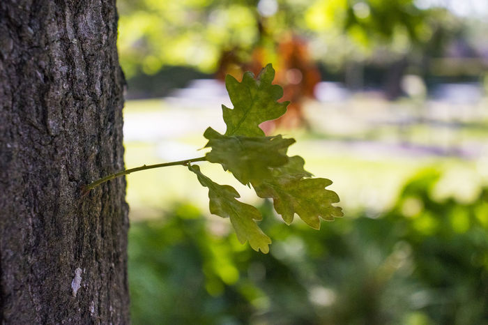 Beauty In Nature Close-up Day Focus On Foreground Fragility Green Color Growth Leaf Nature No People Outdoors Plant Tree Tree Trunk