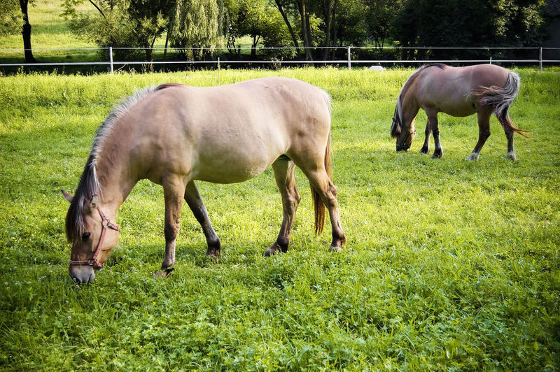 Animal Themes Beautiful Horses Domestic Animals Grass Grazing Horses Horse Horses Mammal Outdoors Sunshine And Horses