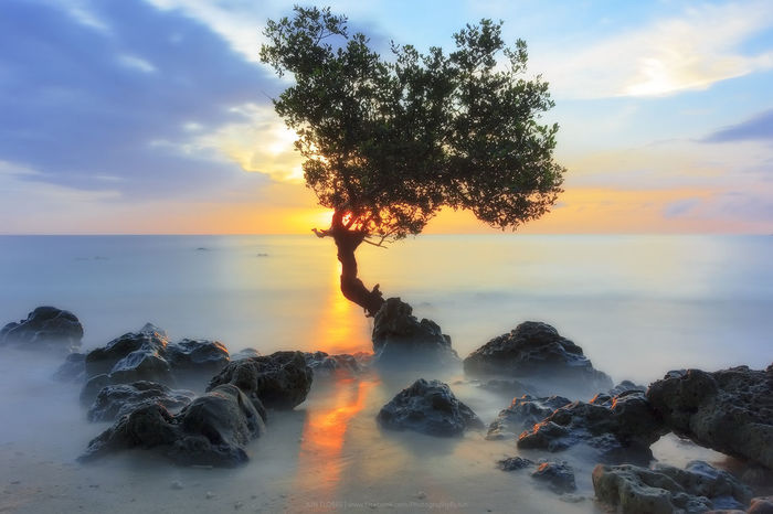 Lone Tree Sunrise Sunrise Seascape Tree Water Sea Beach Sky Horizon Over Water Cloud - Sky Dramatic Sky Shining