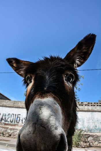 Close-up portrait of donkey against sky