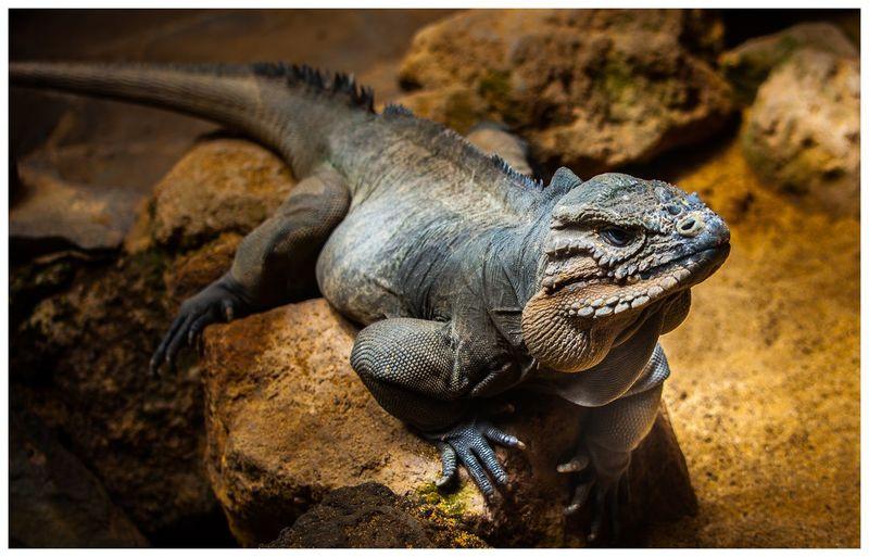reptile Reptile