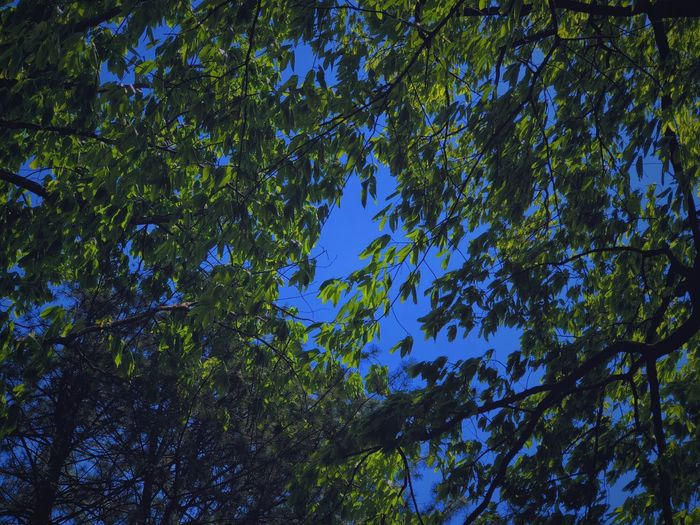 Night Tree Plant Low Angle View Beauty In Nature Growth No People Sky Nature Blue Sunlight