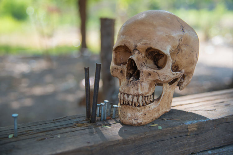 Body Part Bone  Close-up Day Fear Focus On Foreground Human Body Part Human Bone Human Skeleton Human Skull Selective Focus Single Object Skeleton Skull Spooky Still Life Table Wood - Material
