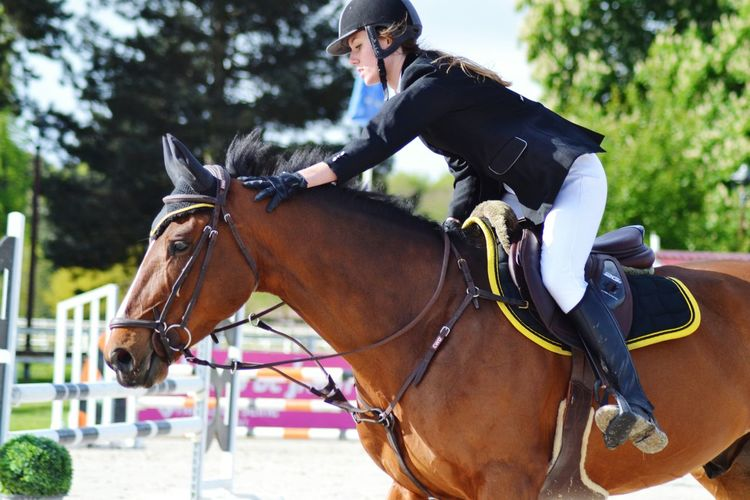Horse Riding Horseback Riding Domestic Animals Sports Race Competition Animal Themes Outdoors Eventing Cheval Pferd Pferde Caballos Cso Jumping Greetings Jardy