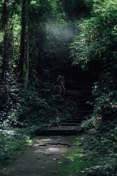 Hiking through the wood Person In Nature Tree Plant Forest Land Growth Nature Beauty In Nature Green Color Non-urban Scene Outdoors WoodLand The Great Outdoors - 2018 EyeEm Awards