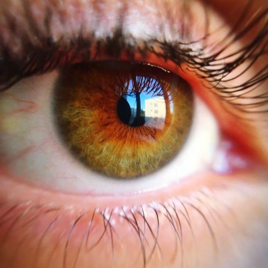 Human Eye Real People Eyesight Eyelash Macro Eyeball Close-up One Person