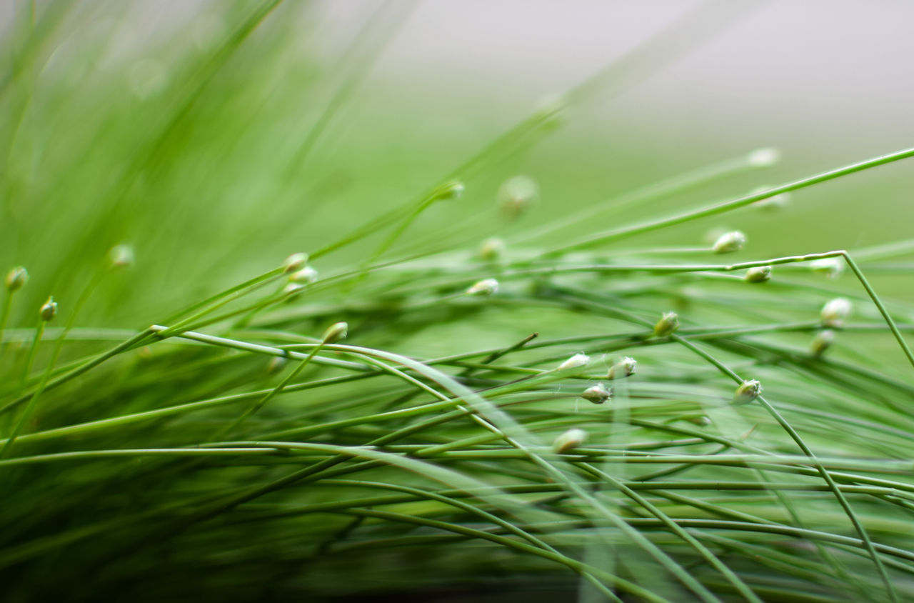 green color, nature, growth, grass, close-up, plant, beauty in nature, outdoors, no people, day, freshness, leaf, fragility, water