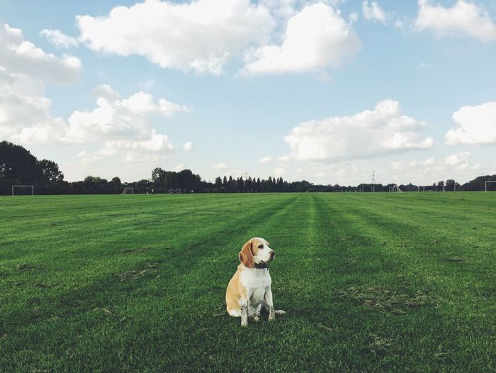 Dog sitting on grassy field against cloudy sky