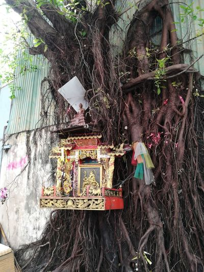 It's normal to see a shrine and 7-color clothes at a huge banyan tree around Thailand. Shrine Buddha Statue Huge Tree Streetside Kanesha Outdoors No People Tree Day Walkway EyeEmNewHere