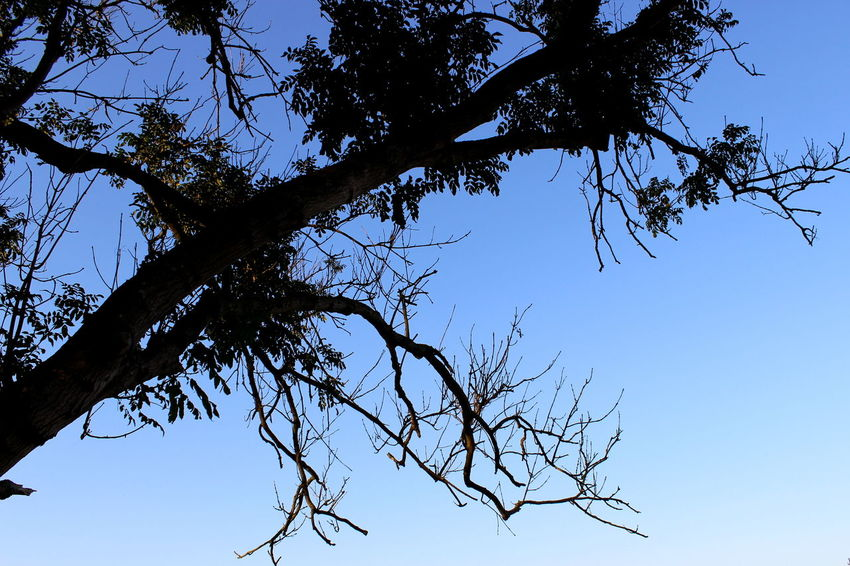 Bare Tree Beauty In Nature Blue Branch Clear Sky Close-up Day Growth High Section Low Angle View Nature No People Outdoors Scenics Sky Sunset Tranquil Scene Tranquility Tree Tree Trunk Twig