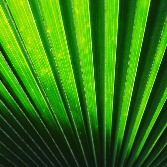 Leaves Shadow Green Green Green!  Shadows & Lights Abstractart Green Color Green Leaves Green Big Leaves