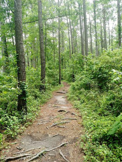Hiking Hikingadventures