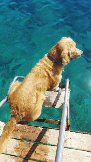 Chelia🐶 Sea Goldenretriever Antalya EyeEm Selects Dog Pets Swimming