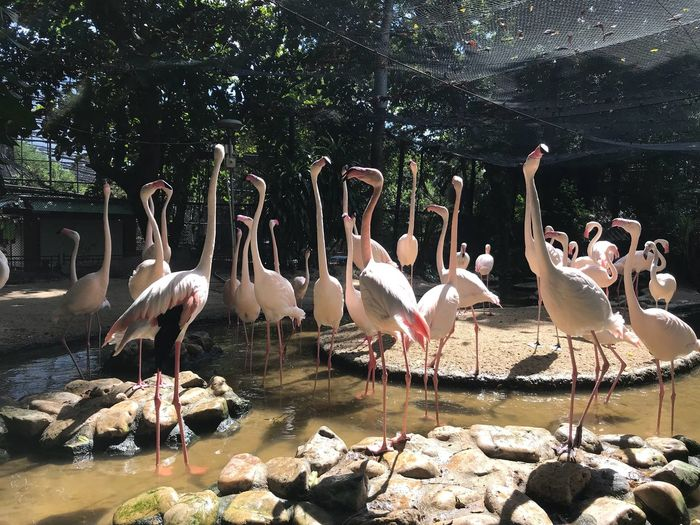 Phoenicopterus Animals In The Wild Bird Animal Wildlife Animal Themes Sunlight Nature Outdoors Lake Water No People Day Large Group Of Animals Tree Flamingo Beauty In Nature Phoenicopterus Phoenicopterus Ruber