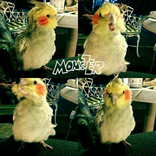 Minha monstrinha <3 linda hahahaha