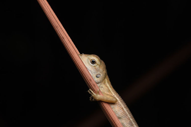 Close-Up Of Lizard On Twig At Night