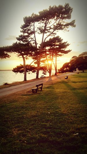 Sunset Sun Sky Trees Silhouette Bench Beautiful Beach Nature Park Path Shore Grass